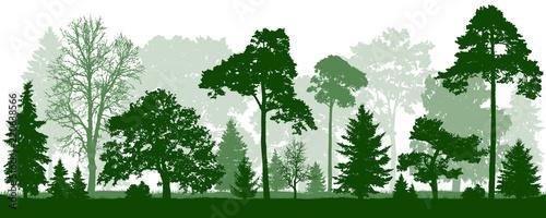 Forest green trees silhouette Fototapete