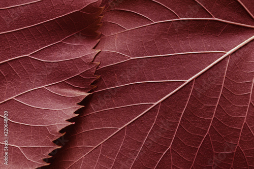 Spoed Foto op Canvas Macrofotografie Macro image of red leaves, natural background
