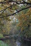 Fototapeta Na ścianę - autumn forest