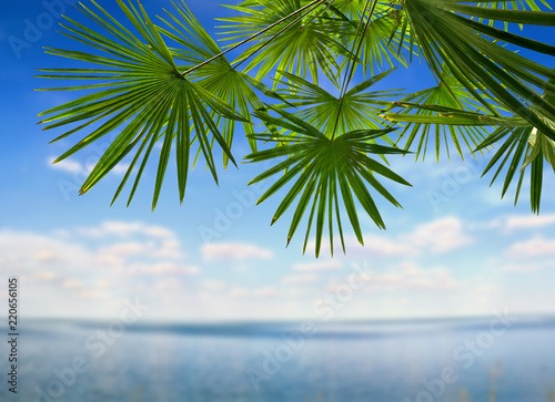Deurstickers Palm boom Tropical leaves palm tree ( Livistona ) on blue sky background with space for text