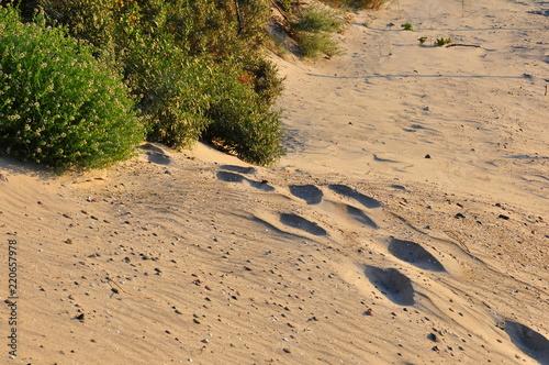 Foto  Wydma ślady stóp na piasku