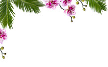 Frame Of Tropical Leaves Palm Tree, Monstera And Palm Tree Cycas Revoluta ( Sago Palm ) With Pink Flowers Moth Orchids On A White Background With Space For Text. Top View, Flat Lay.