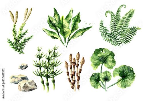 Obraz na plátně Prehistoric plants collection