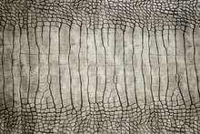 Genuine Crocodile Skin Leather Stomach Part Beautiful And Real Skin Tone Abstract Texture Background.