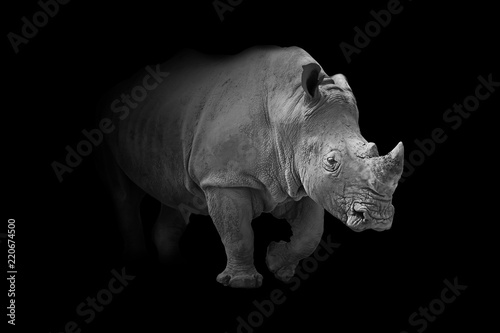 Spoed Foto op Canvas Neushoorn rhinoceros animal wildllife interior art collection