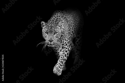 Montage in der Fensternische Panther leopard wildlife animal interior art collection