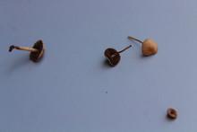 Small Garden Mushrooms
