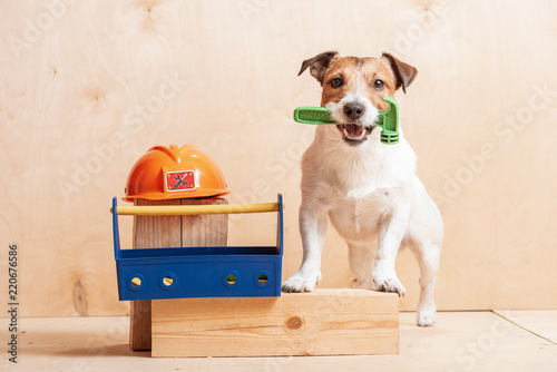 Photo Dog as amusing builder holding hammer in mouth standing near hardhat