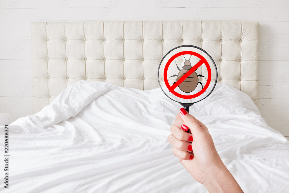 Fototapety, obrazy: Cleaness and purity concept. Unrecognizable female with red manicure hold lens with stop insects sign detects bed bugs. No bugs there. Checking sanitation conditions in hotel room