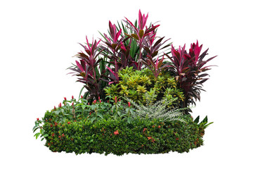 Tropical landscaping garden shrub with various types of plants, bush of foliage (cordyline, dracaena, croton) and flowering (Ixora, red button ginger) isolated on white background with clipping path.