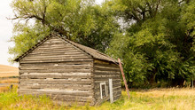 Old Log Cabin With A Ladder Leaning Against With A Huge Tree