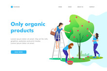 Young Women Picking Apples On A Farm In Autumn. Concept Of Healthy Nutrition. Landing Page Template.