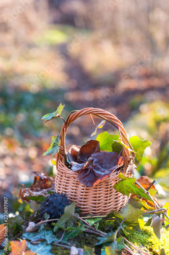 Still life with auricularia mushrooms and ivy in the basket, natural seasonal outdoor background Canvas Print