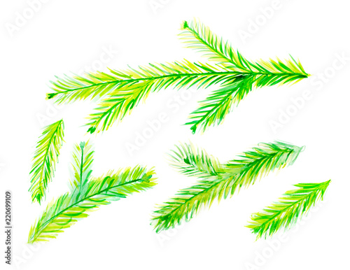 Fotografering  Collection of Green Watercolor Christmas Tree Branches Isolated