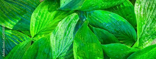 Obraz Fresh garden leaves bell organic gardening background - fototapety do salonu