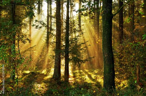 Sonnenstrahlen im Herbstwald, Nadelwald im morgendlichen Sonnenlicht, Hintergrun Canvas Print