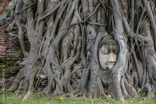 Amazing buddha head in tree root in Mahathat temple, Ayutthaya, Thailand.