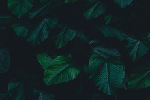 Dark Botanical Background Trop...