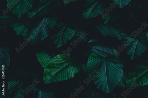 Valokuvatapetti Dark botanical background tropical leaves faded bg