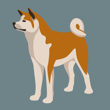 Akita Inu Dog Vector Illustrat...