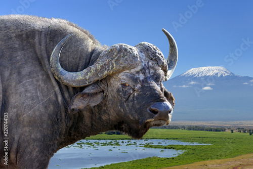 Spoed Foto op Canvas Buffel Wild African buffalo bull