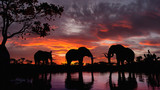 Fototapeta Sawanna - Elephants walking by the lake