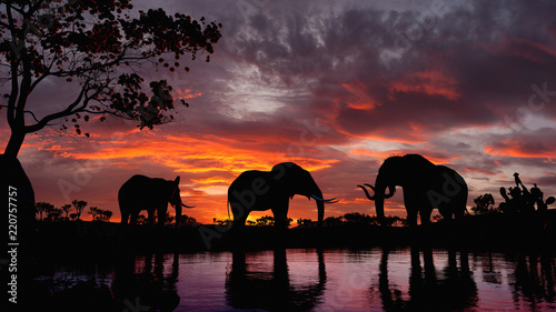Canvas Print Elephants walking by the lake