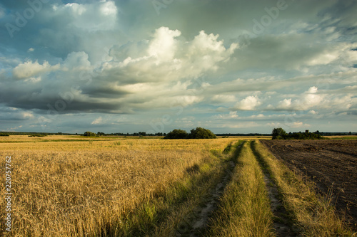 Spoed Foto op Canvas Platteland Dirt road through a field of grain and dark clouds in the sky