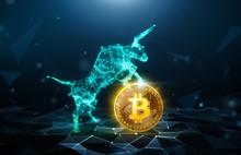 Bull Market, Bitcoin