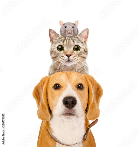 Poster Chien Funny portrait of pets isolated on white background