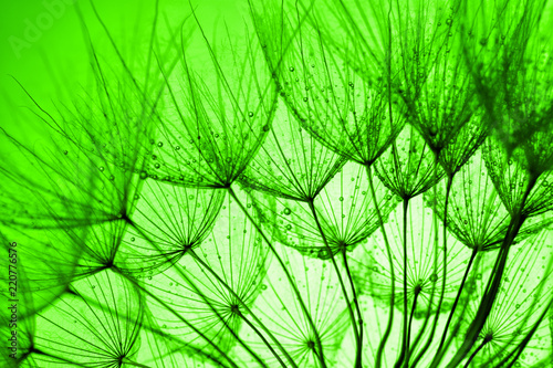 green dandelion background