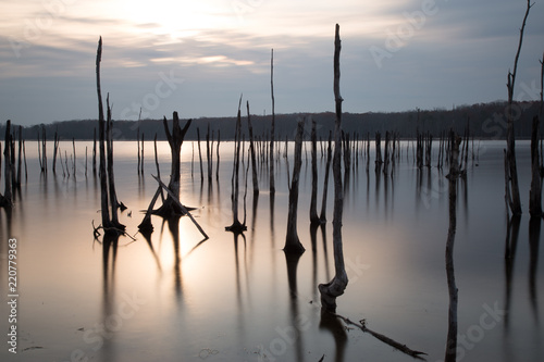 Foto  Multiple Tree Stumps Manasquan Reservoir Sunrise Refrection