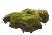 Moss Isolated On White Backgro...