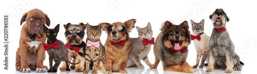 cute group of elegant cats and dogs with bowties © Viorel Sima