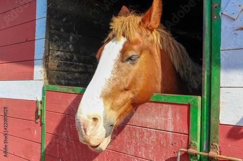 Obraz na plátně  Testa cavallo nella stalla in campagna nel maneggio, Sirolo, Italy