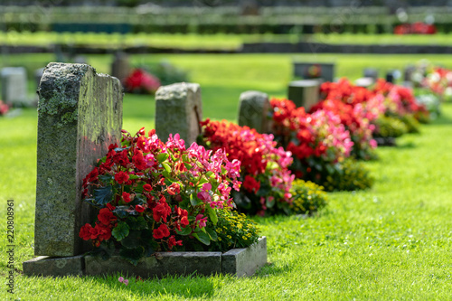 Photo Row of grave stones with red and pink flowers