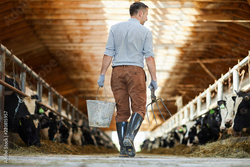 Valokuva Back view portrait of modern farm worker  holding bucket crossing sunlit cow she