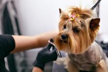 Dog Gets Hair Cut At Pet Spa G...