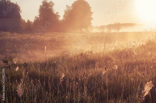 Obraz foggy morning in rural field at sunrise. natural summer (spring) background - fototapety do salonu