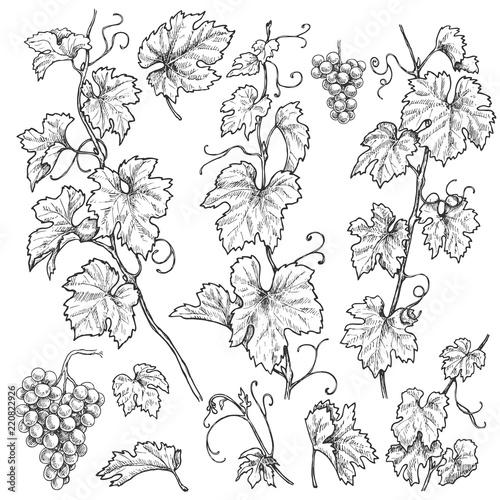 Hand Drawn Grape Branches  Set Fototapete