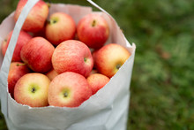 Apple In Garden Bag