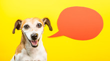Laughing Dog With Open Mouth. Happy Smiling Pet On Yellow Background And Orange Speech Balloon. Funny Silly Dog Jack Russell Terrier. Adorable Face