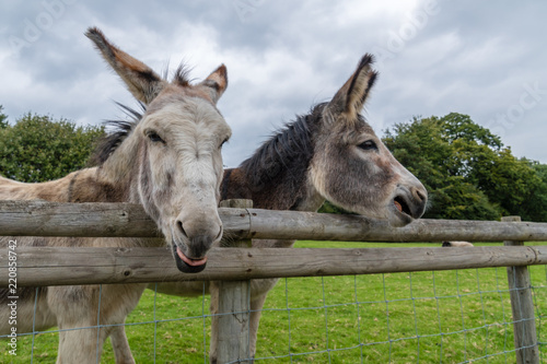 In de dag Ezel Donkey's Pulling Funny Faces