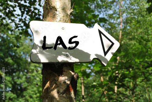 Foto op Plexiglas Weg in bos Droga do lasu