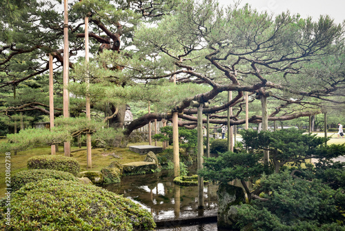 Giant Bonsai In Japanese Garden Buy This Stock Photo And Explore Similar Images At Adobe Stock Adobe Stock