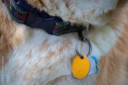 Valokuva  dog collar with blank ID tags
