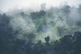 widok przyrody lasu tropikalnego, vintage filtr obrazu - 220884175