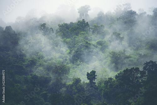 Fototapeta premium widok przyrody lasu tropikalnego, obraz vintage