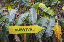 Survival Sign In Jungle