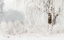 Winter Nature Background. Hoar...
